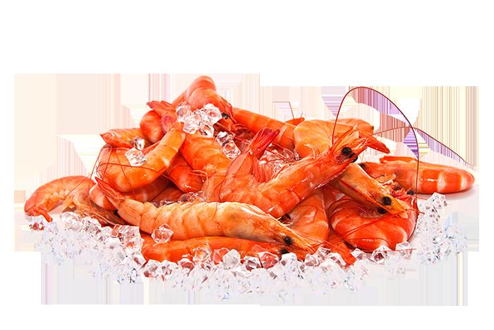 shrimpsice